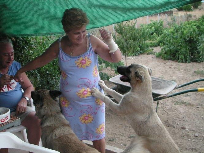 Luis, mi mamá ysus perros, Flecha y Whisqui